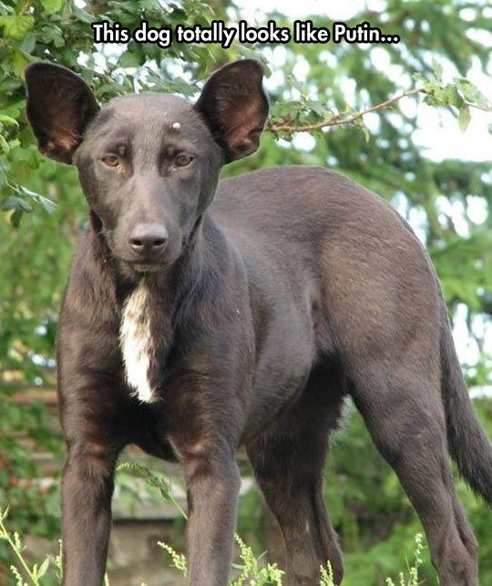 Wladimir Putin hat Geburtstag Hundegesicht