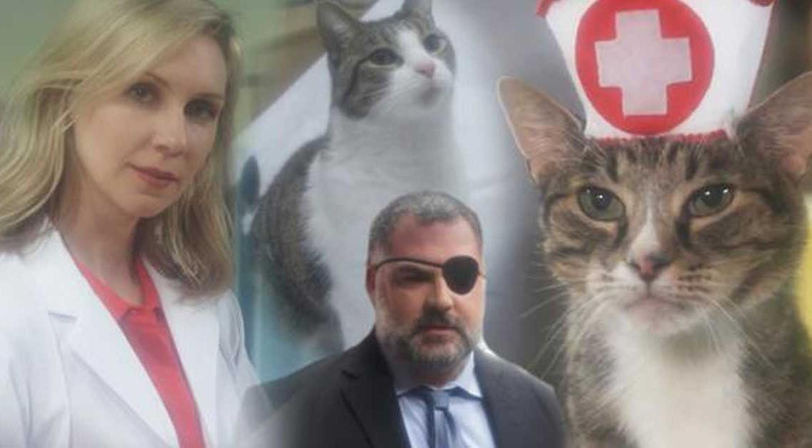 cat hospital field day katzen-seifenoper