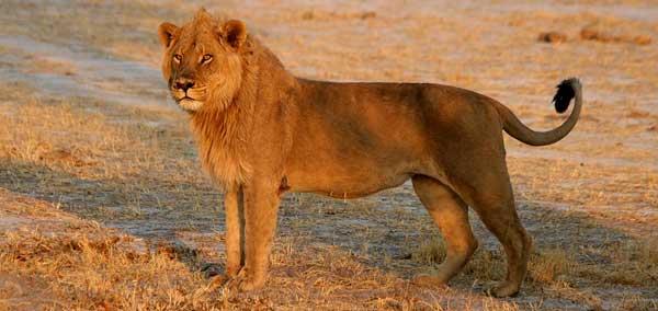 Via Wildlife Pictures Online