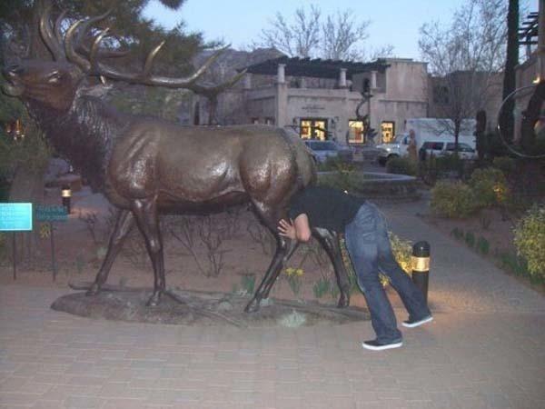 lustige fotos mit statuen inszenieren hirsch