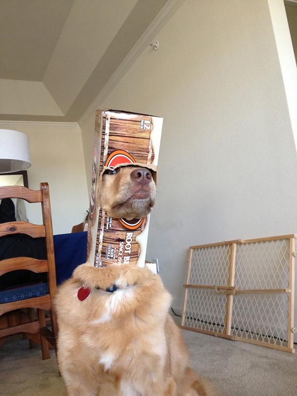 hund klemmt in weinflasche