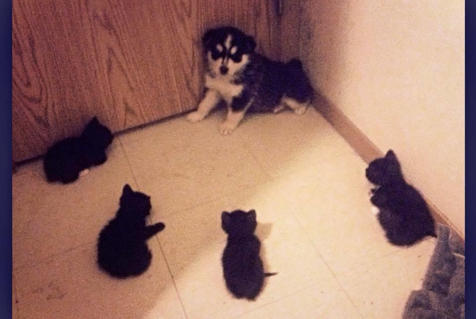 welpe hat angst vor bösen katzen