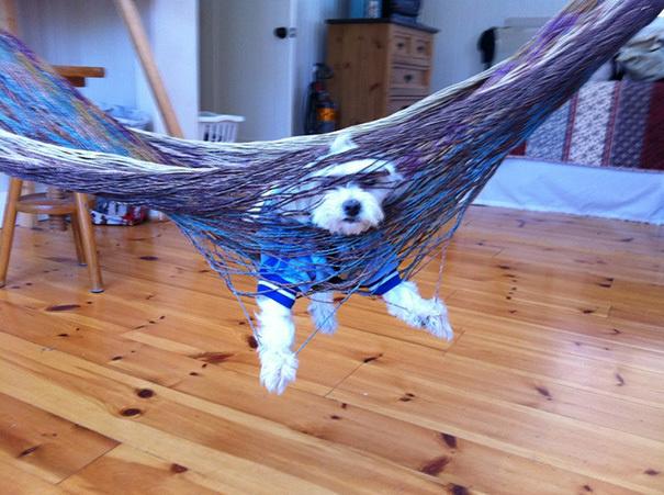 hund hängt in hängematte lustiges bild