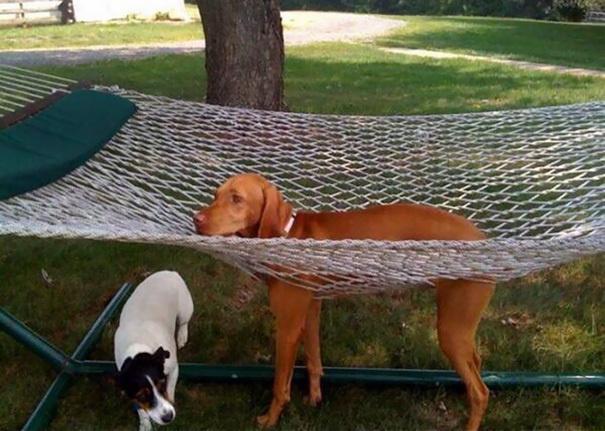 hund in hängematte eingeklemmt kuriose hundebilder