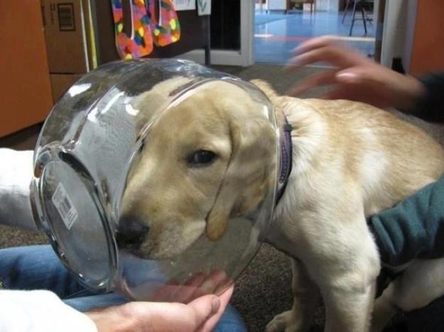 bemitleidenswerte hunde hund steckt in glas fest