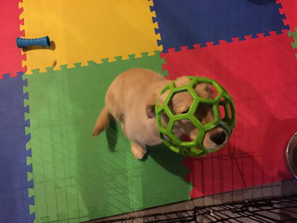 lustige hundebilder hund steckt in ball fest