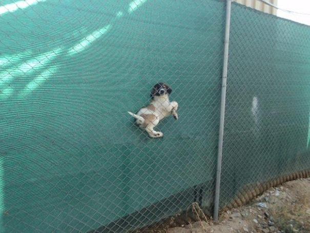 hund hängt fest