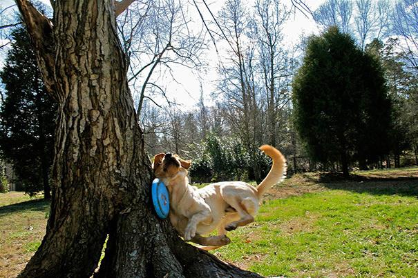 bemitleidenswerte hunde unfall mit baum und frisbee