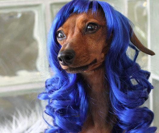 Perücken für Tiere Katy Perry Hund