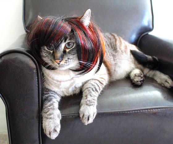 Perücken für Tiere Katze mit Perücke lustig