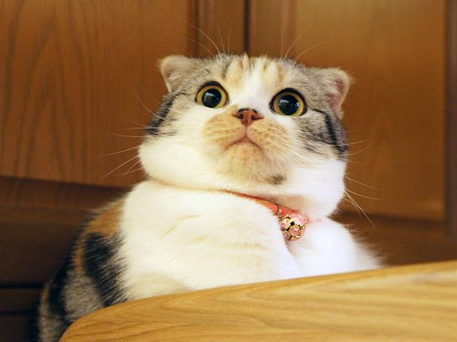 katzen erschrecken lustig