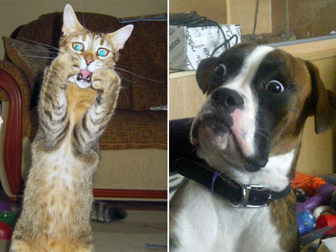empörte Haustiere und nackte Menschen