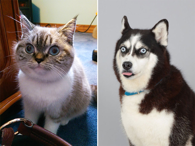 verstörte hunde und katzen