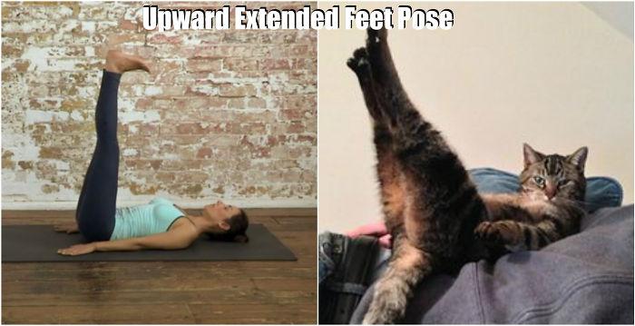 Tiere machen Yoga