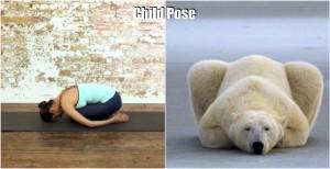 Yoga und Eisbär