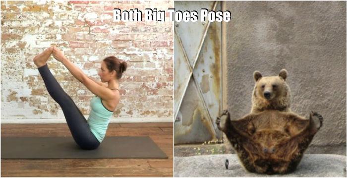 Bär macht Yoga