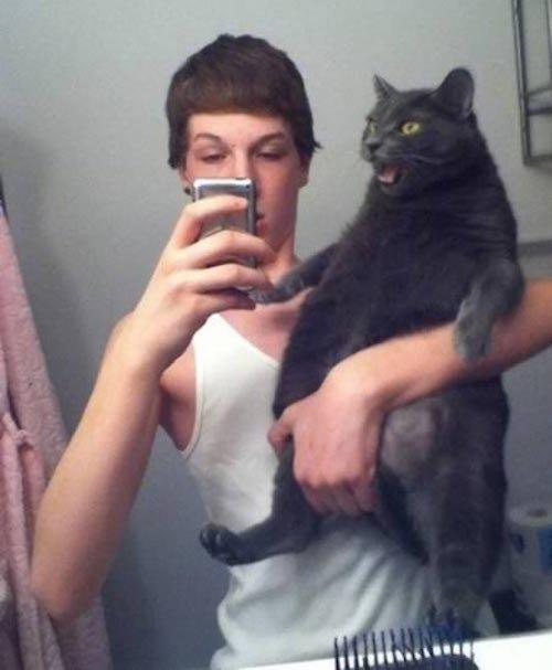 katze will nicht aufs foto lustig