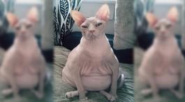 unfotogene Katzen