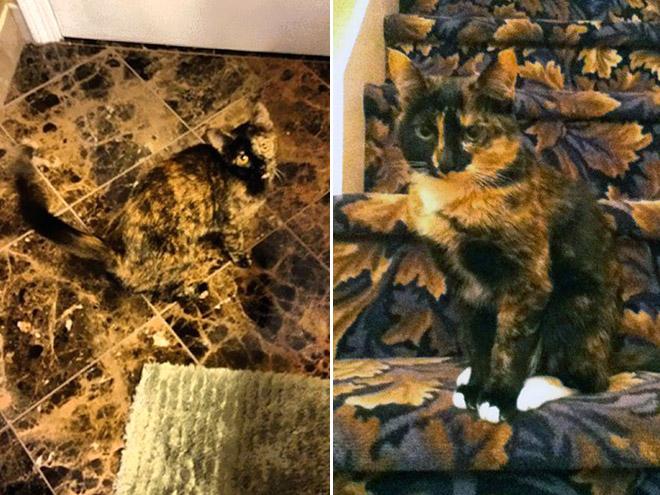 Spiel wo ist die Katze Camouflage