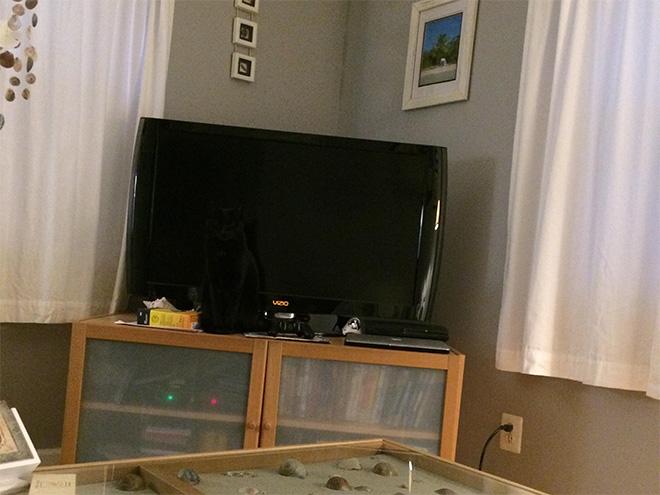 Versteckbild mit Katze