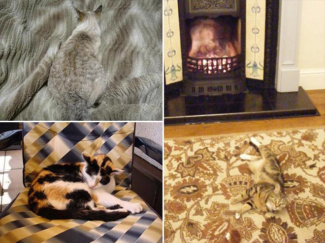 Suchbild mit Katzen