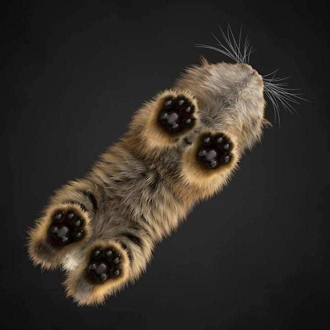 katzen auf glas stehend