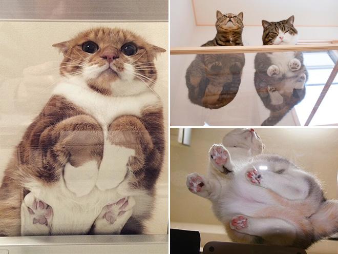 katzen auf glas augen