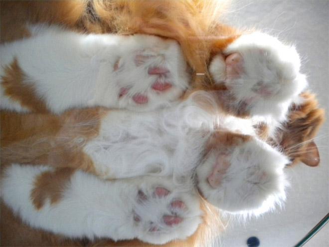 katzen auf glas liebe