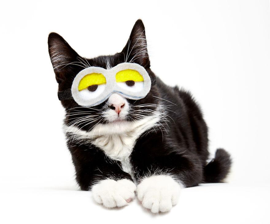 katzen mit hüten brille gelb minion