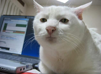 ungeschminkte Katzen