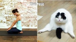 tiere machen yoga the lion pose