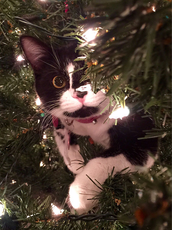 Katzen und Weihnachtsbäume