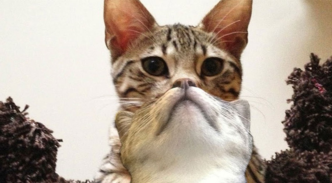Perfekt getimte Katzenfotos