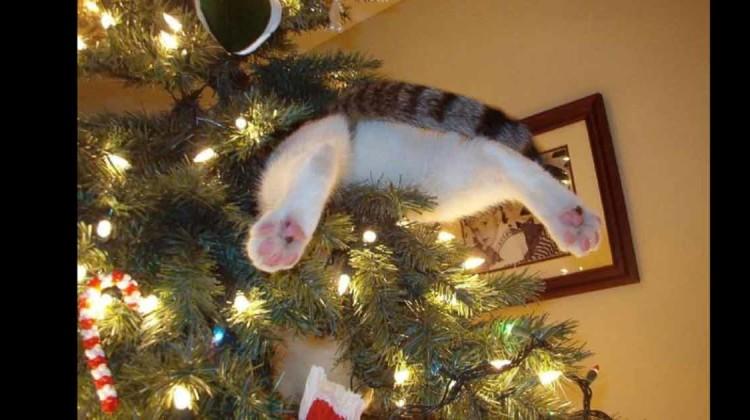 Slider Katzen und Bäume