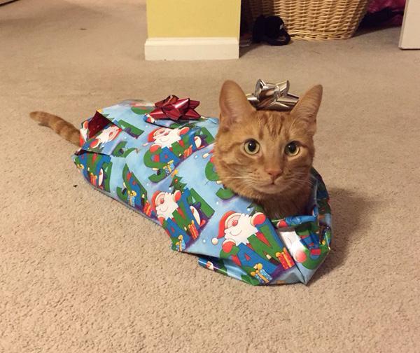 tiere und weihnachten 2