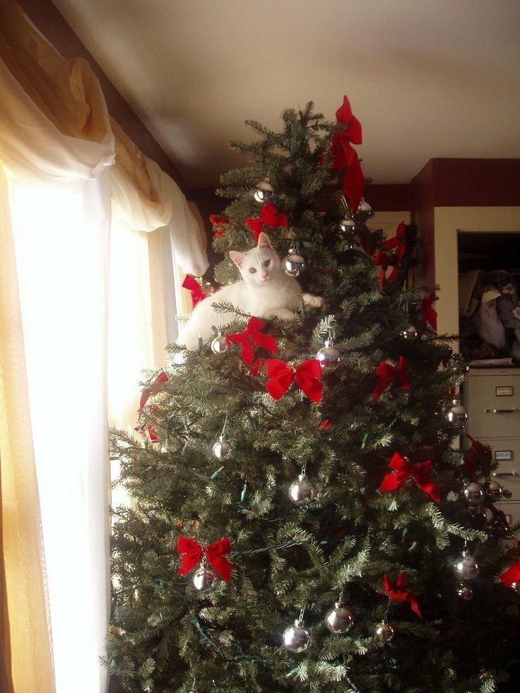 tiere und weihnachten 3