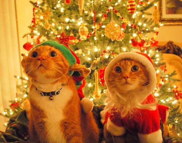 tiere und weihnachten weihnachtsmann katzen