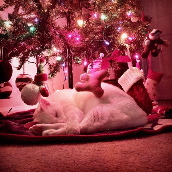 tiere und weihnachten schlafende katze