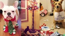 tiere und weihnachten katzen hunde