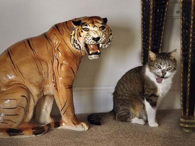 Katzenfotos