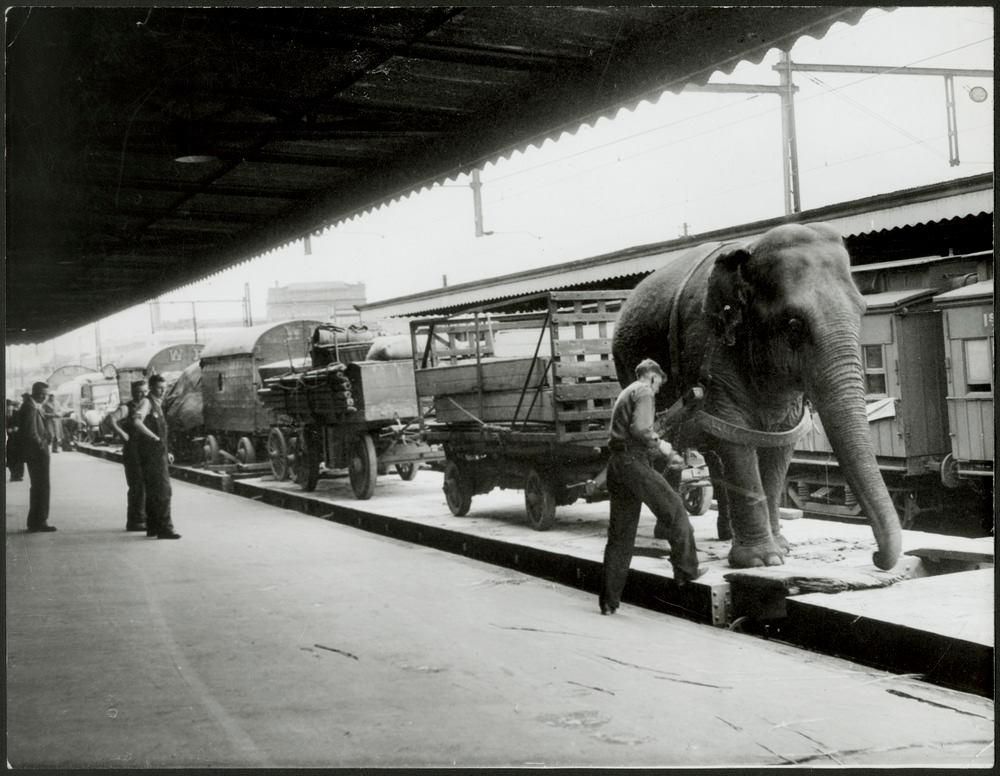 circus australia 1948