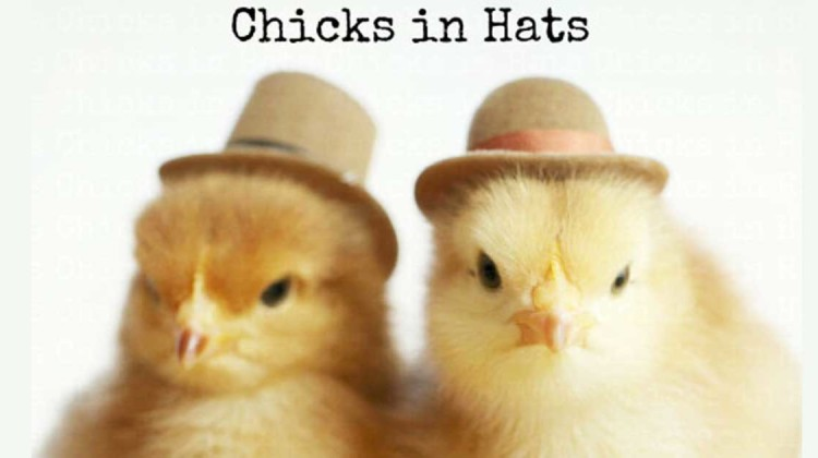 Chicks in Hats Julie Persons