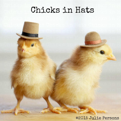 Chicks in Hats Julie Persons Freunde