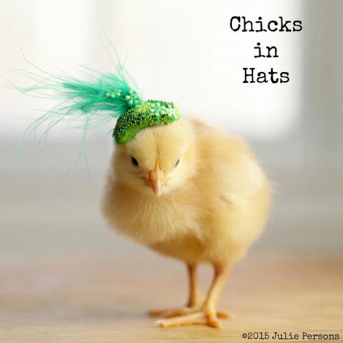 Küken mit Hüten Chicks in Hats Julie Persons