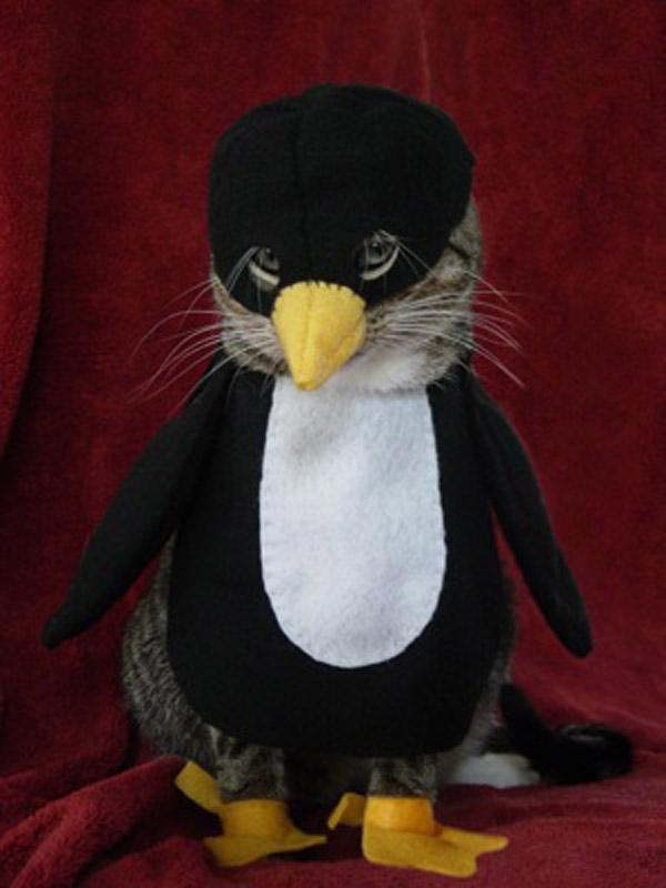 katze im pinguinkostüm