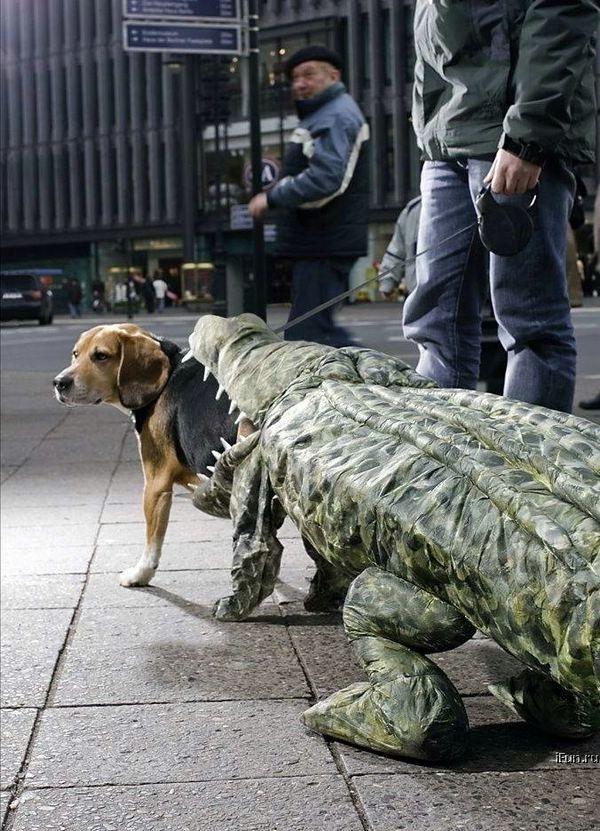 krokodil frisst hund tierkostüme
