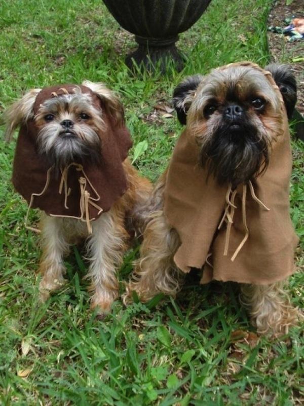 Hunde als Ewoks verkleiden Tierkostüme