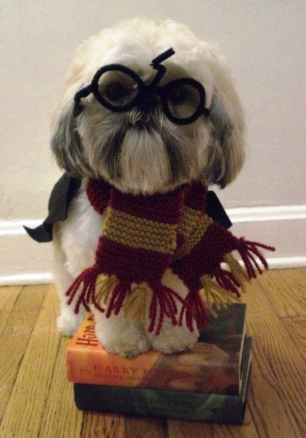 harry potter hundekostüm
