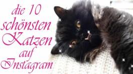 Katzen auf Instagram