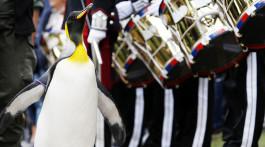 Sir Nils Olav Pinguin und Ritter